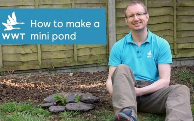 Do It Yourself – Tutorials – How to make your own mini-pond from a container | WWT