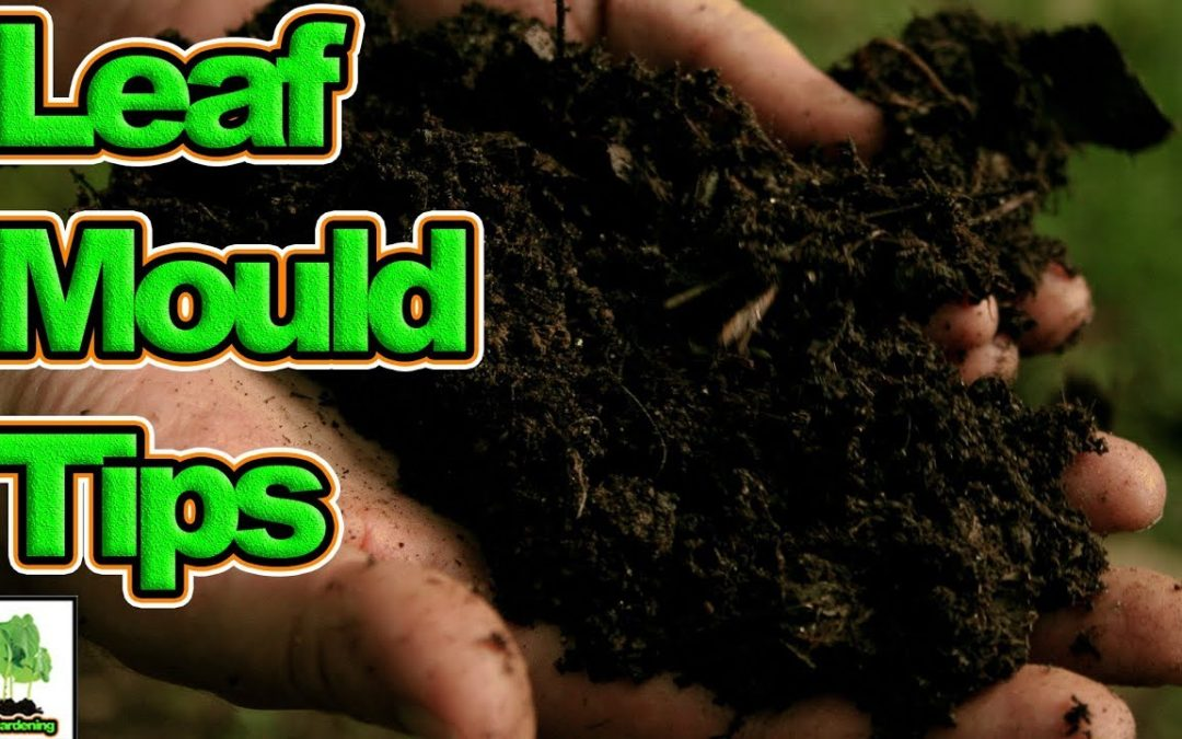 search engine optimization tips – Hints, Tips And Tricks To Make Faster Leaf Mould
