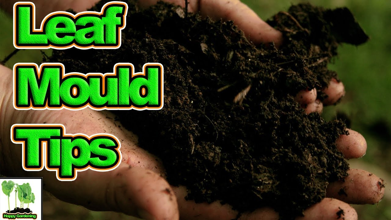 Hints, Tips And Tricks To Make Faster Leaf Mould